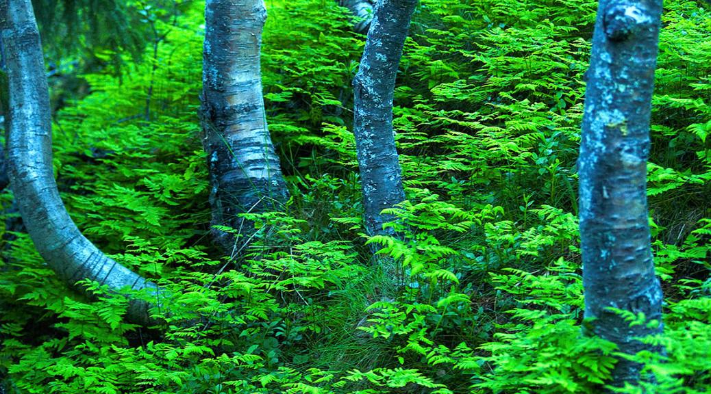 Skogbunn